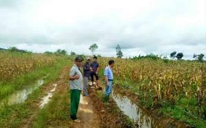 Minat Masyarakat Untuk Bertani di Barito Utara Meningkat