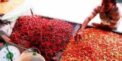 HARGA CABAI : Seorang warga sedang membeli cabai di pasar. Ternyata harga cabai di Puruk Cahu sudah mencapao Rp120 ribu per kilo. Ini karena pasokan dari petani ke pedagang sangat sedikit.
