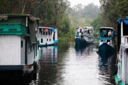 WISATA ALAM : Rombongan perahu kelotok yang mengangkut wisatawan sedang menyusuri Sungai Sekonyer di Taman Nasional Tanjung Puting. Mereka bisa singgah di Desa Wisata, Sekonyer.